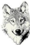 wolfheadnar